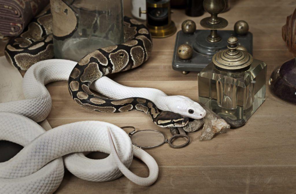 夢占い蛇の夢17種。脱皮する夢は、幸福や長寿の象徴。噛まれる ...
