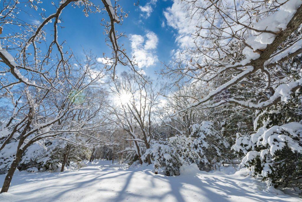 夢占い雪の夢26種。雪道の上を歩くは困難が、季節外れの雪は幸運が